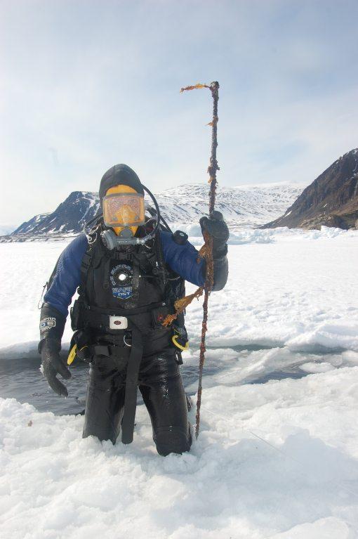 Seaweed covered Inuit harpoon found on the sea floor 30' below the crack
