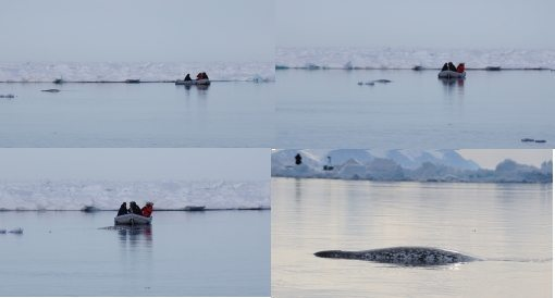 Narwhal approaches Arctic Kingdom group in inflatable boat