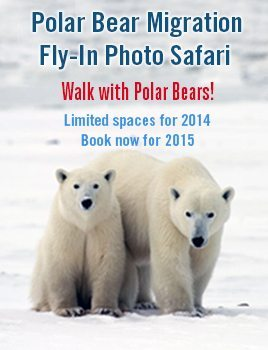 Polar Bear Migration Fly-In Feature Home Page
