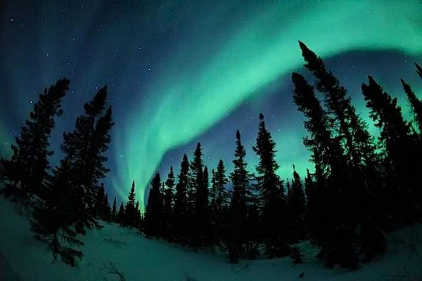 Northern Lights Arctic Kingdom
