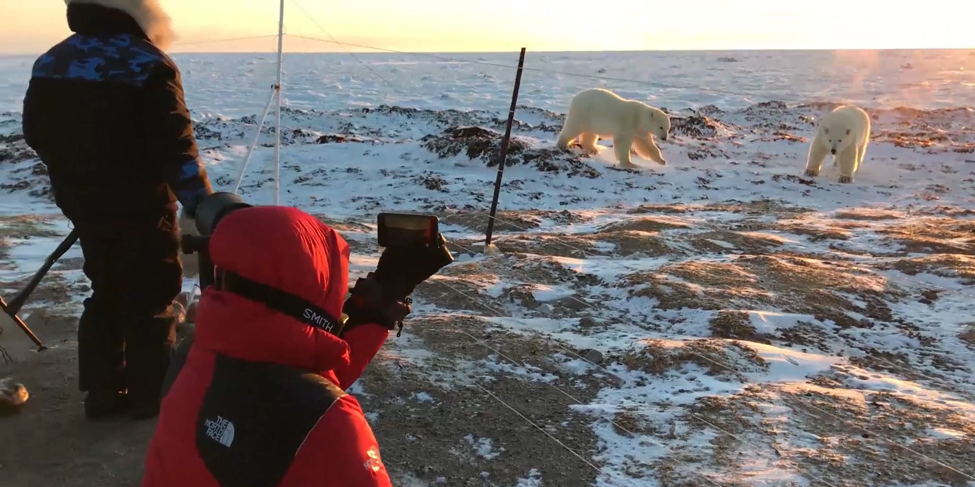 polar bear encounters