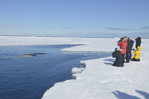 whale watching tours from the ice