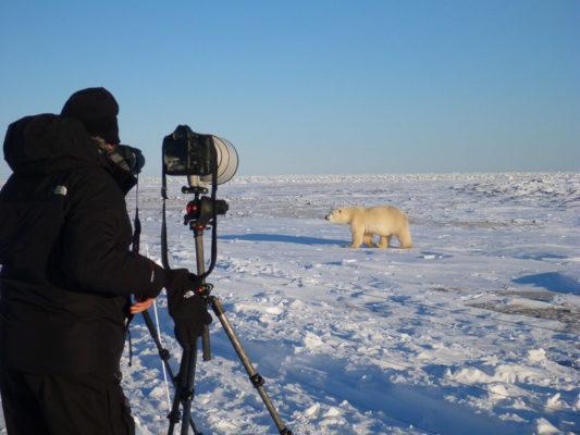 Photographer experience the Arctic on a Safari