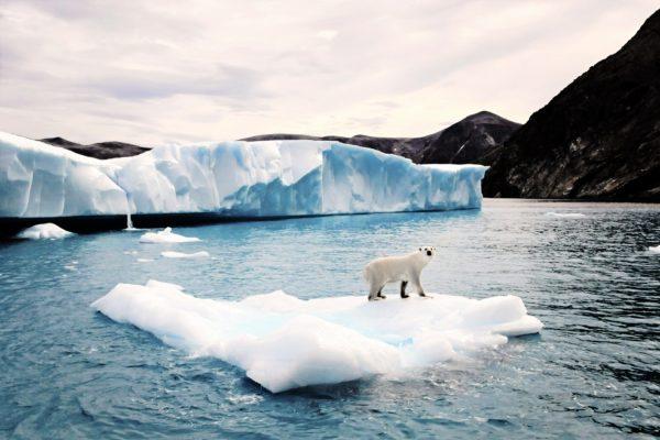 Photo of polar bear from boat angle