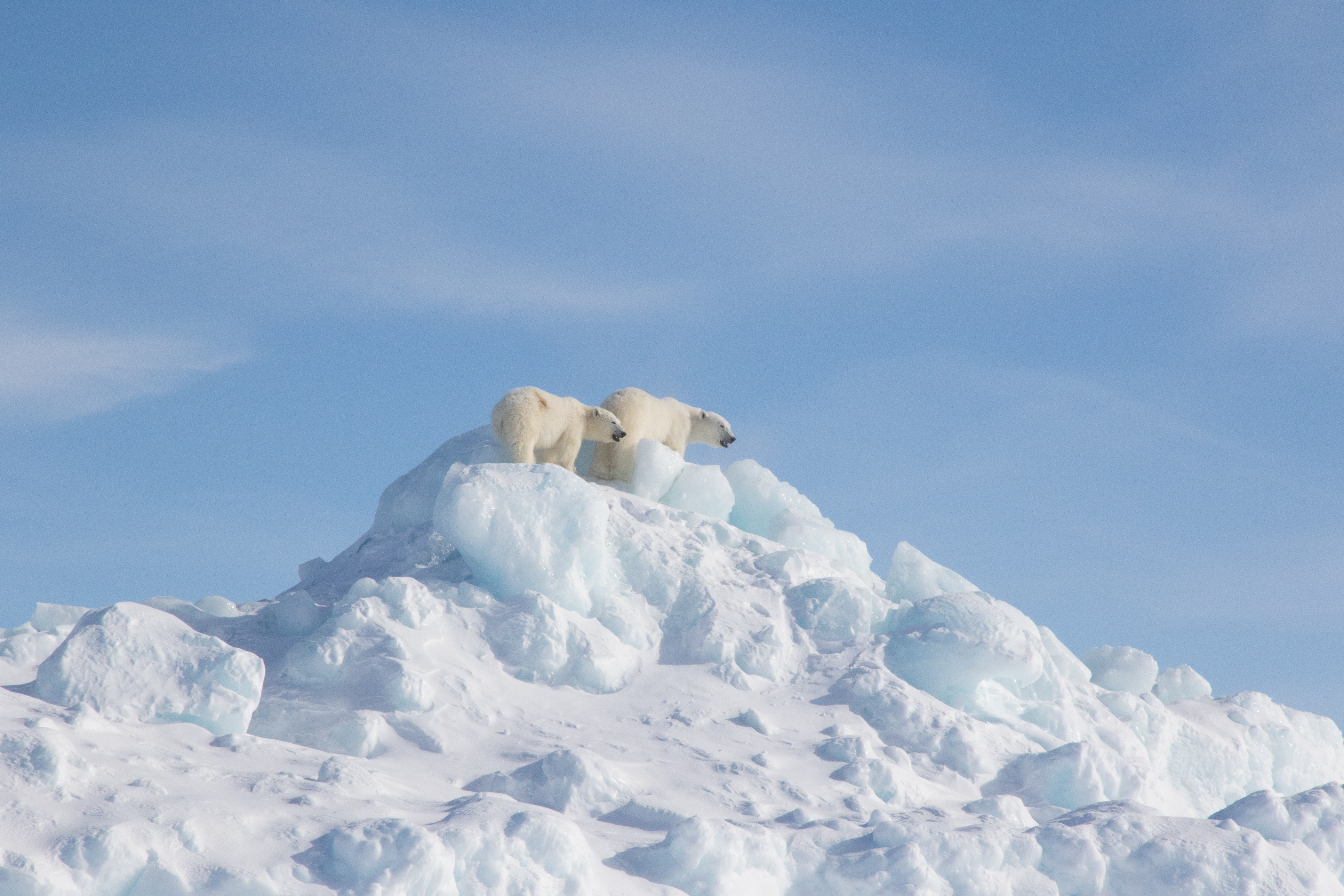 Spring Thaw in the Arctic | Arctic Kingdom