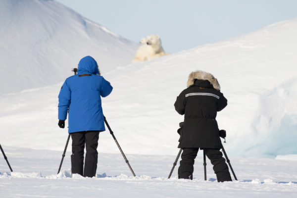 photographing a polar bear and cub in the arctic