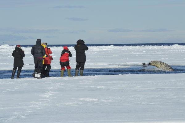 Photographers at the Arctic floe edge