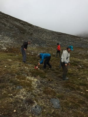 Foraging in the arctic summer