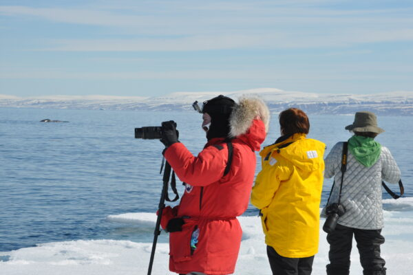 photographing whales from the floe edge