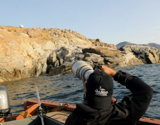 photographing a polar bear on Baffin Island