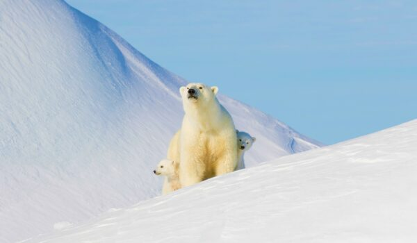 arctic travel